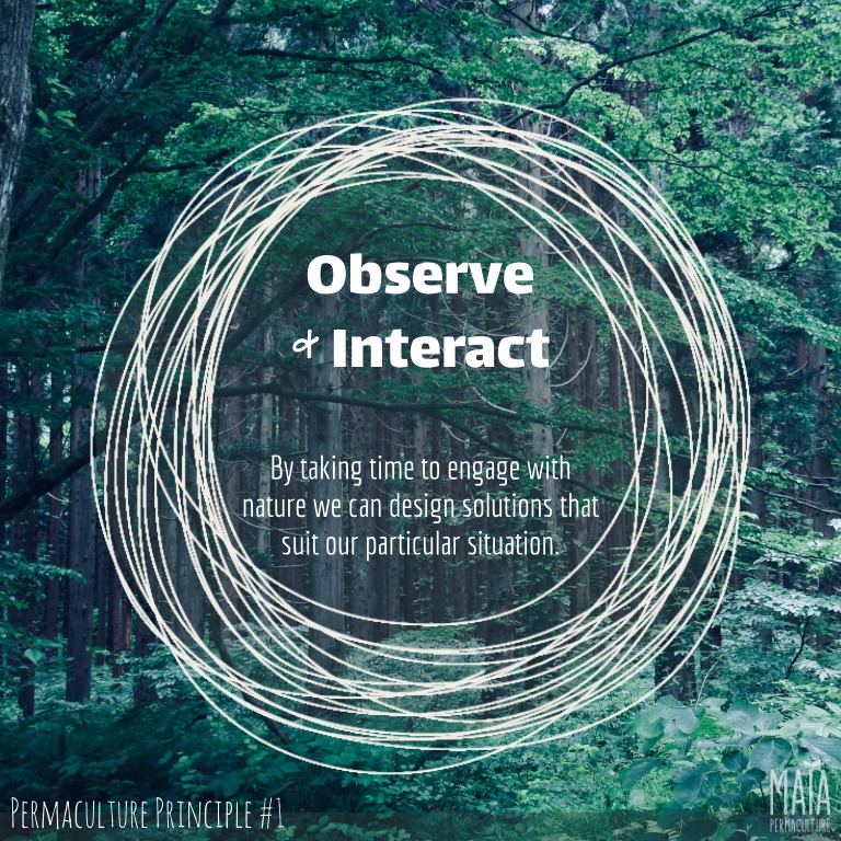 Observe and interact