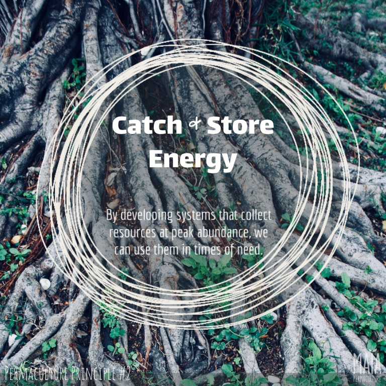 Catch and store energy