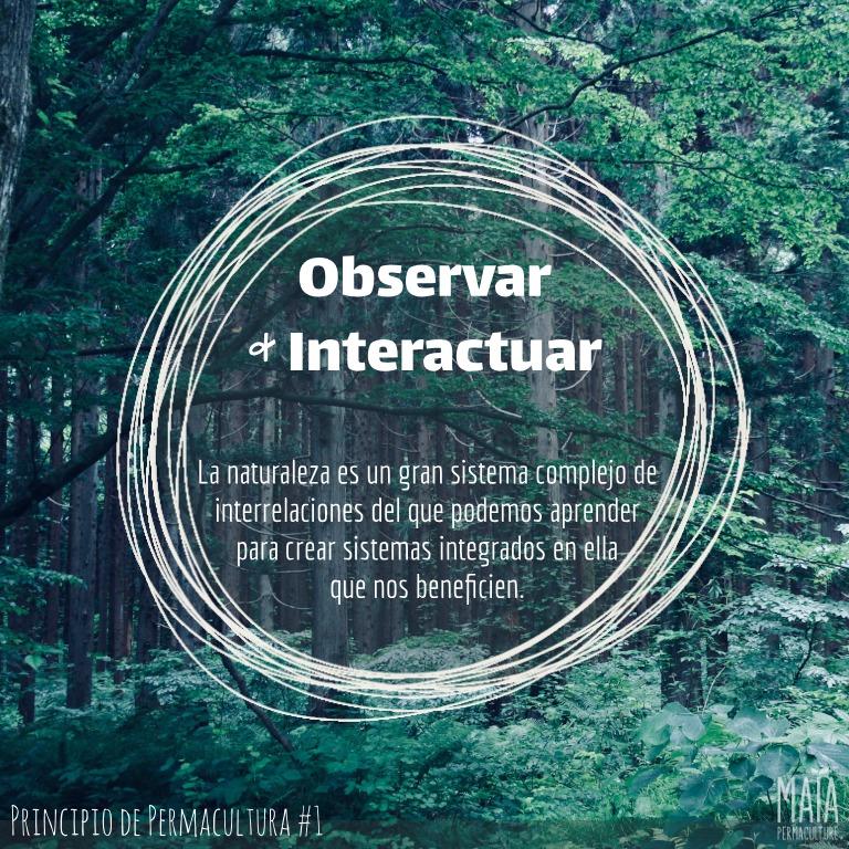 Observa & interactúa